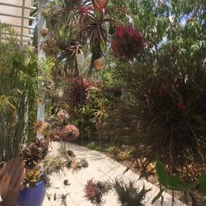 Air plants at botanical gardens
