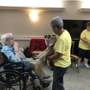 Assisted living residents enjoy a raccoon