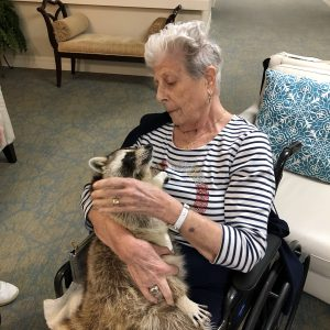 Arbor Glen visit with blind raccoon