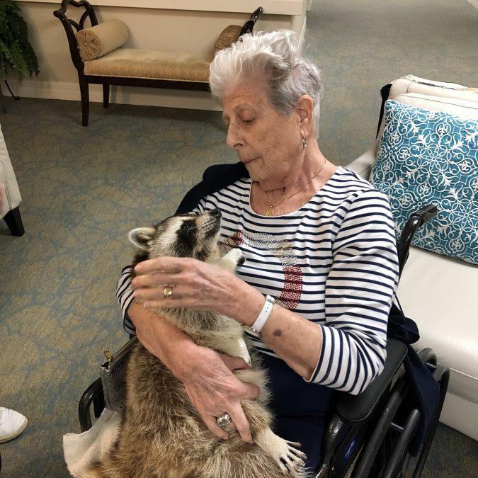 Arbor Glen visit with blind raccoon