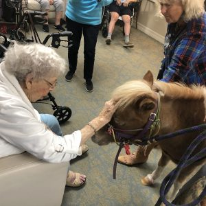 Senior living community meets mini horse