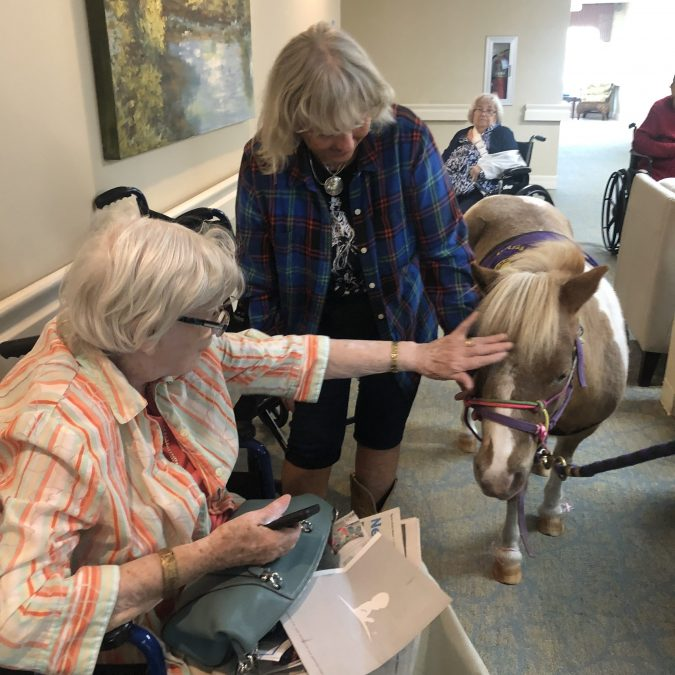 senior lady pets mini horse