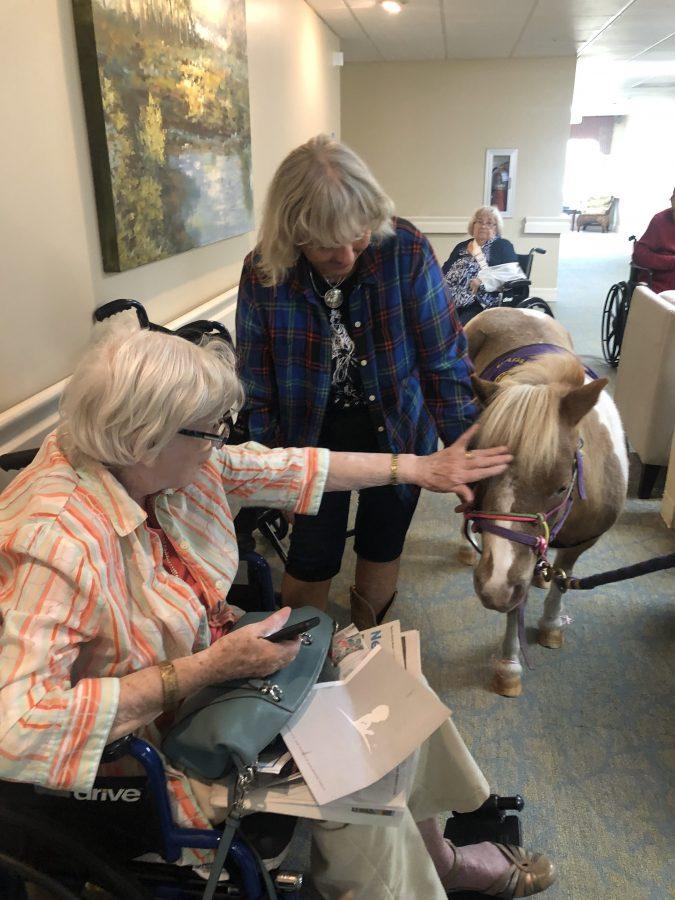 senior lady pets mini horse