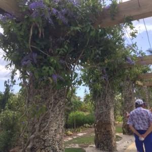 Man walks under flowers
